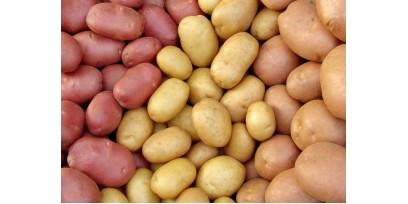 Почему стоит купить семенной картофель у нас в магазине?