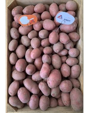 Семенной картофель Алюэтт, Agrico