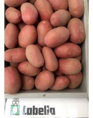 Семенной картофель Лабелла, Solana