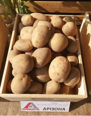 Семенной картофель Аризона, Agrico