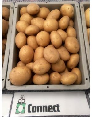 Семенной картофель Коннект, Solana