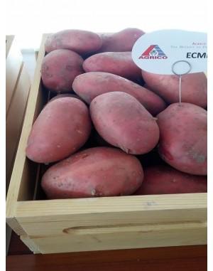 Семенной картофель Эсми, Agrico
