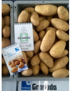 Семенной картофель Гранада, Solana