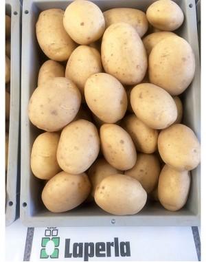 Семенной картофель Лаперла, Solana