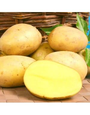 Семенной картофель Лили,  Solana