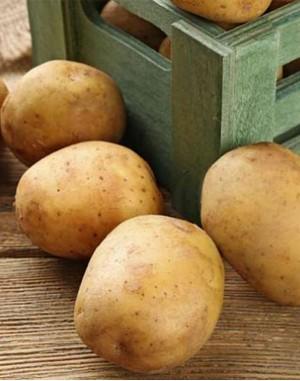 Семенной картофель Нектар,  IPM Potato