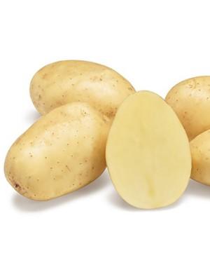 Семенной картофель Парадизо, Agrico