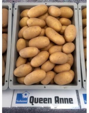 Семенной картофель Королева Анна, Solana