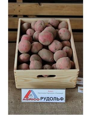 Семенной картофель Рудольф, Agrico
