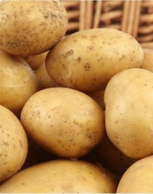 Семенной картофель Саванна,  IPM Potato