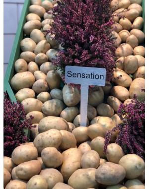 Семенной картофель Сенсейшн,  IPM Potato
